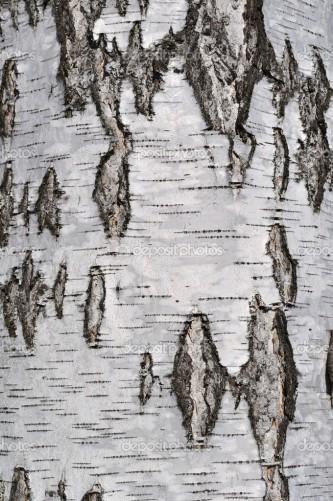 Rough birch bark texture